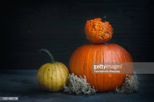 fall harvest of pumpkins - harvest table stock pictures, royalty-free photos & images
