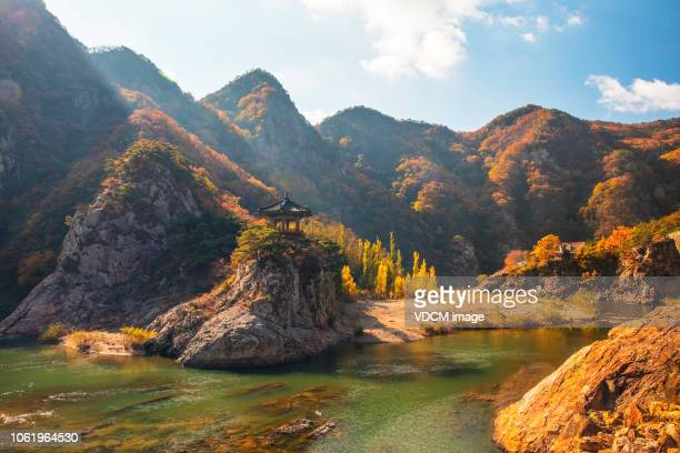 vd726 fall harvest - south korea stock pictures, royalty-free photos & images