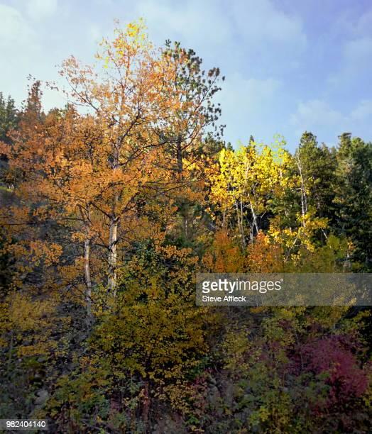 Fall Hillside