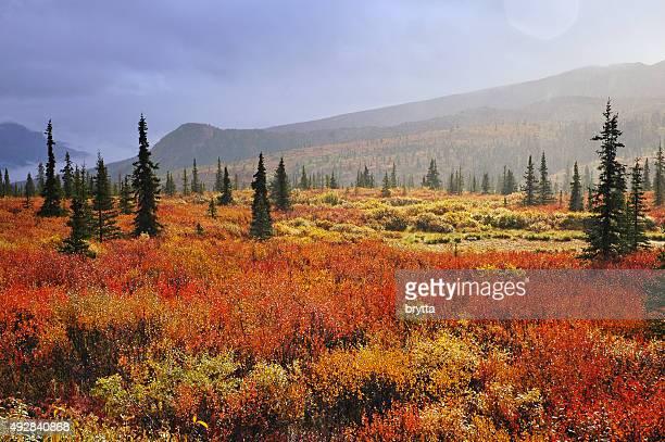 Fall in Denali National Park,Alaska