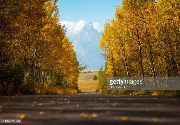 fall in grand teton national park - jackson hole stock pictures, royalty-free photos & images