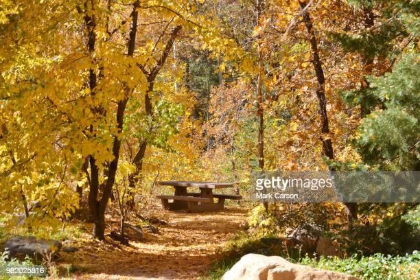 fall in oak creek canyon - oak creek canyon - fotografias e filmes do acervo