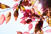 http://www.istockphoto.com/photo/fall-in-the-forest-spring-tree-with-red-leaves-and-rays-of-sun-light-gm960106554-262183970