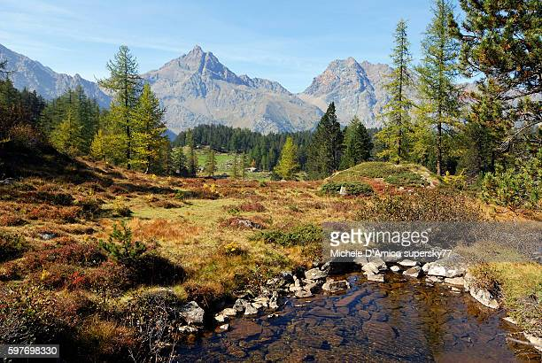 fall in the subalpine meadow. - european larch stock pictures, royalty-free photos & images