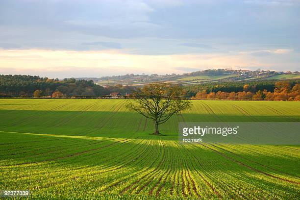 Fall landscape with lone tree in focus