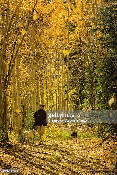 Fall Leaf Walk by Ouray, Colorado