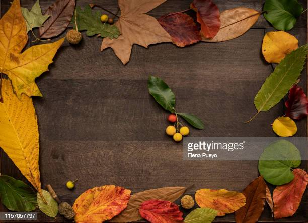 fall leaves, autumn concept - happy thanksgiving text stock pictures, royalty-free photos & images