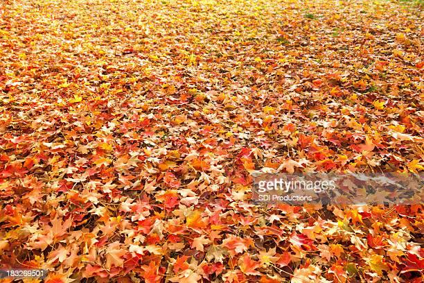 Feuilles d'automne fond réparties sur de l'herbe
