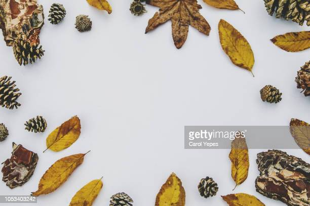 fall leaves frame background - november background stock photos and pictures