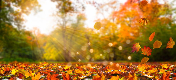 fall leaves in idyllic landscape 1004007610