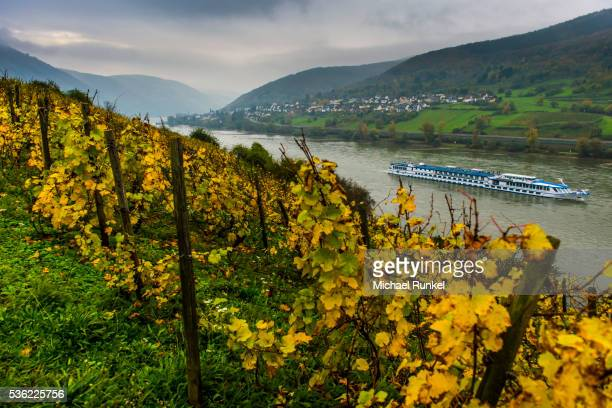 Fall leaves in the vineyards and a cruise ship on the Rhine River, Assmannshausen, Rhine valley, Rhineland-Palatinate, Germany, Europe
