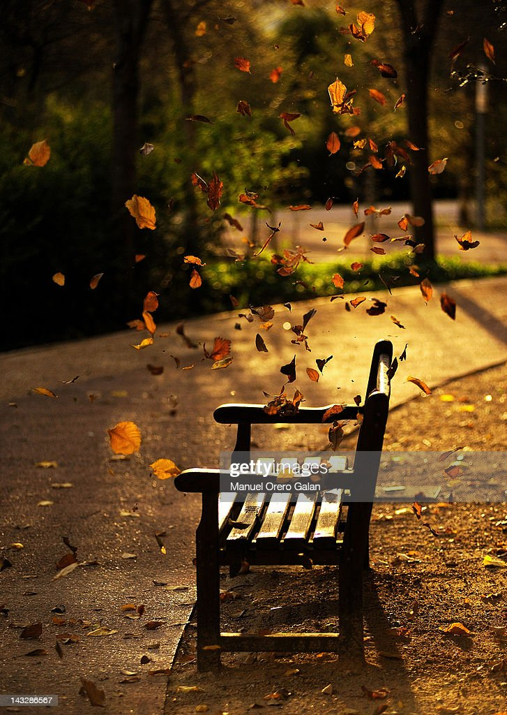 Fall leaves on park bench : Stock Photo