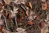 Fall leaves on the bush. Ideal for hunting and military purposes.