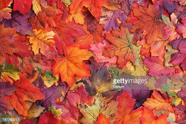 fall leaves - herfst stockfoto's en -beelden
