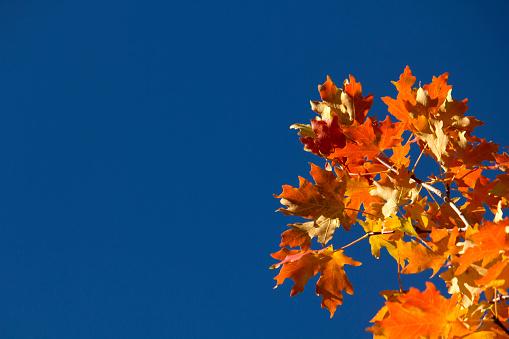 fall leaves 859943776