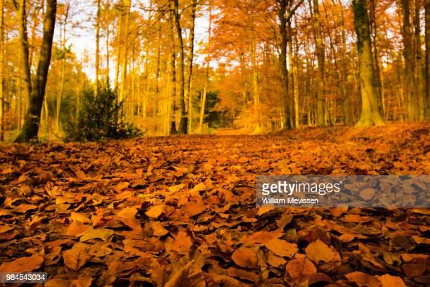 fall(en) leaves - william mevissen stockfoto's en -beelden