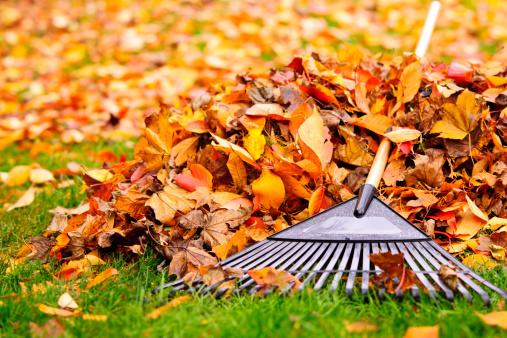 Fall leaves with rake 157256122