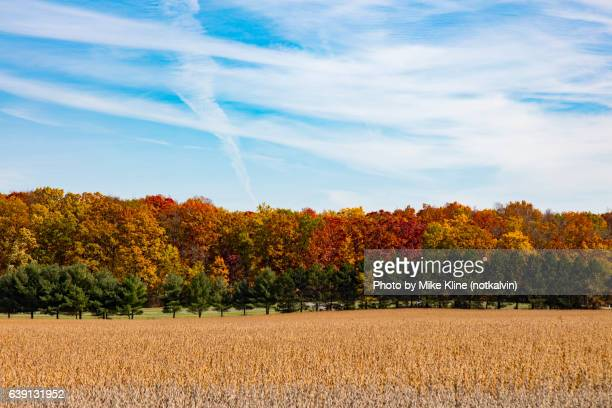 fall line-up - deciduous tree stock pictures, royalty-free photos & images