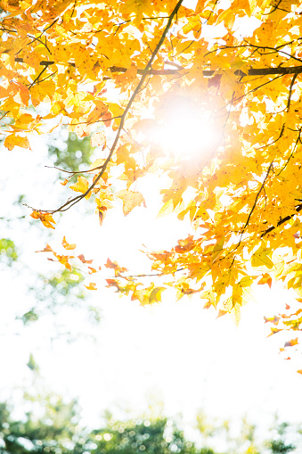 Fall of Full color - gettyimageskorea