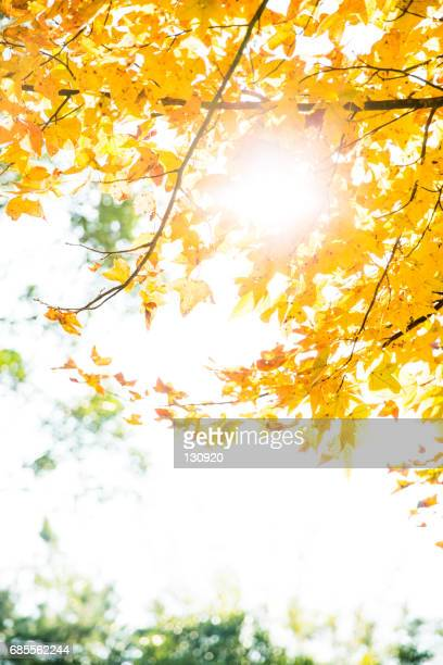 fall of full color - vertical stock pictures, royalty-free photos & images