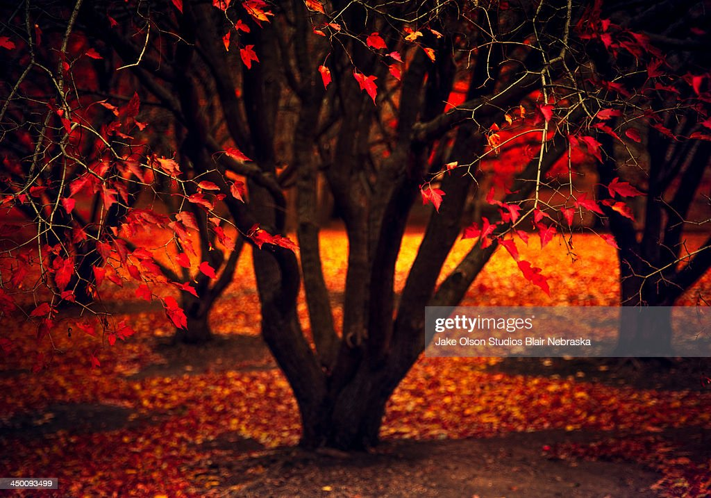 Fall On Fire : Stock Photo