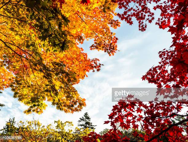 fall. - november background stock photos and pictures