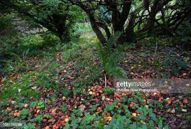 fall - forest floor stock photos and pictures