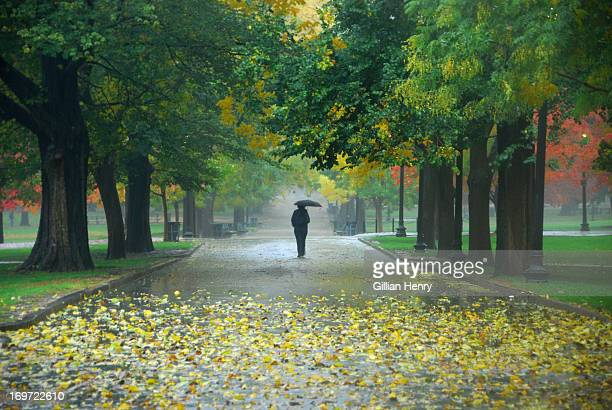 fall rain on boston common - boston common stock pictures, royalty-free photos & images