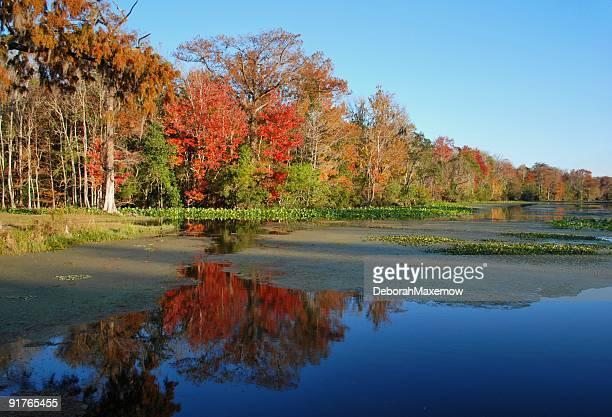 fall river scene - tallahassee stock pictures, royalty-free photos & images