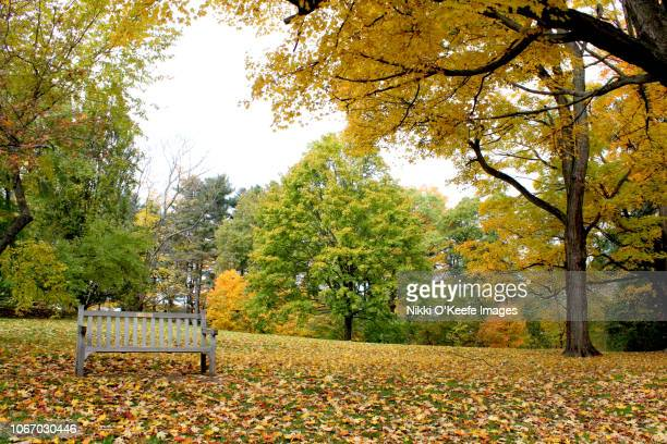 fall scene featuring a park bench - wellesley massachusetts stock pictures, royalty-free photos & images