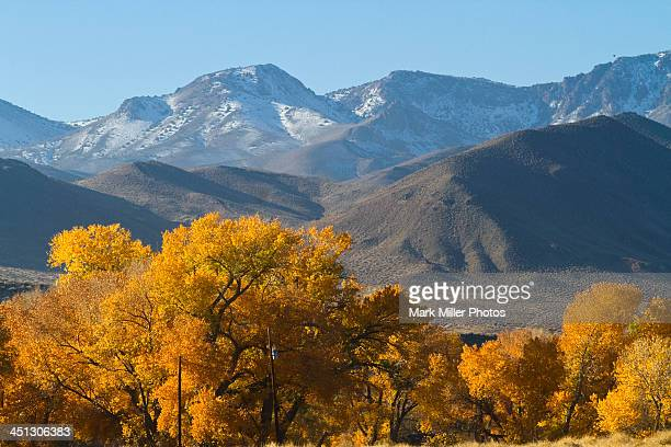 Fall Scenery in Nevada, USA