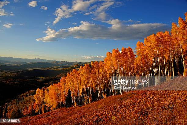 fall season colors in colorado - steamboat springs colorado stock photos and pictures