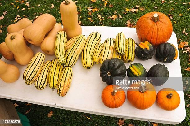 Fall Squash Assortment