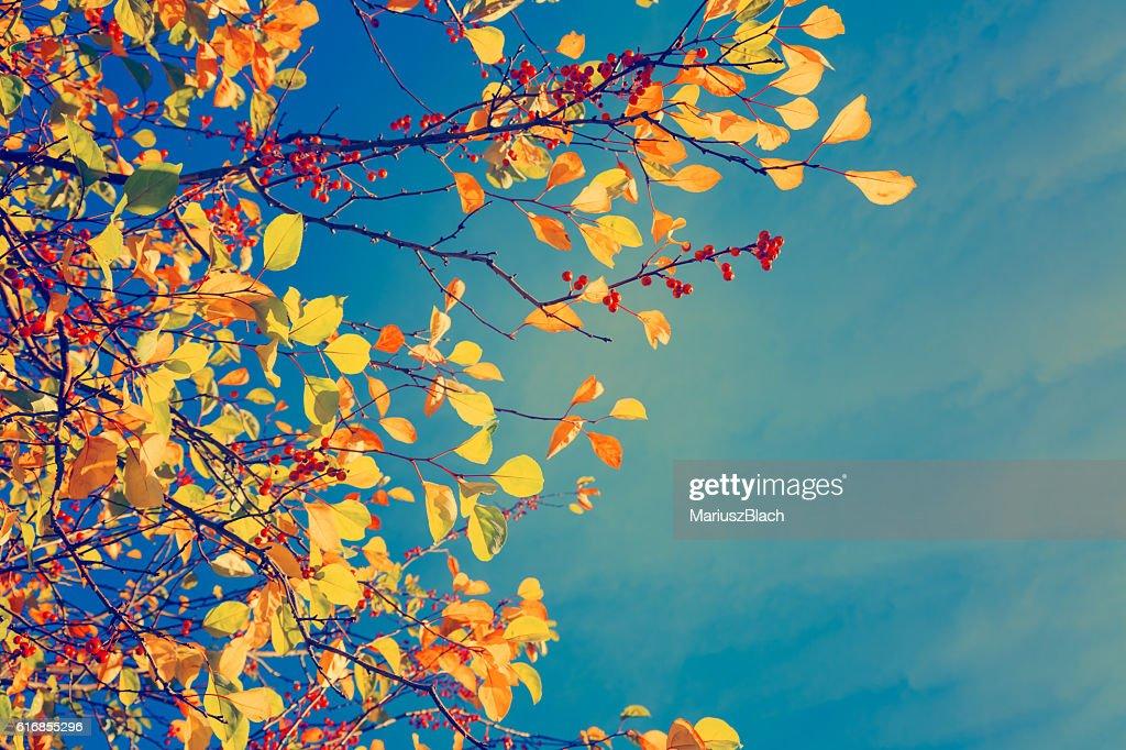 Fall tree background : Stock Photo