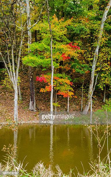 fall tree in the cuyahoga valley national park - cuyahoga river stock photos and pictures