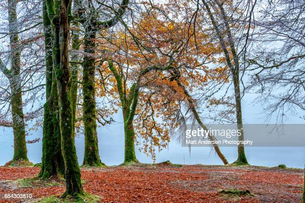 Fall Trees Along Loch Oich near Invergarry Scotland