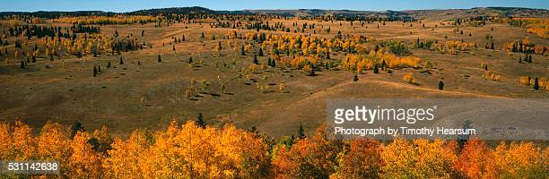 fall trees - timothy hearsum stock pictures, royalty-free photos & images