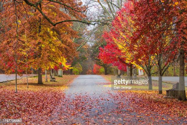 fall trees road - new jersey stock pictures, royalty-free photos & images