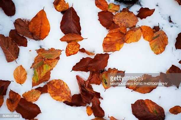Fallen autumn leafs