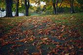 fallen autumn leaves footpath an alley