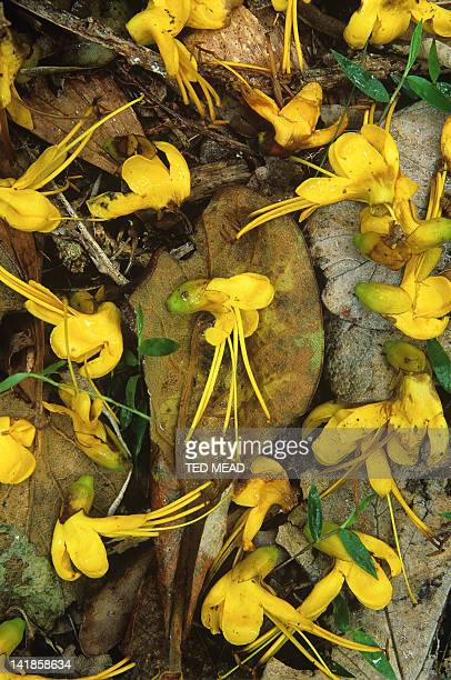 Fallen flowers in tropical rainforest, Hinchinbrook Island National Park, Queensland, Australia.