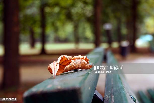 fallen leaf on a bench with a blurred background