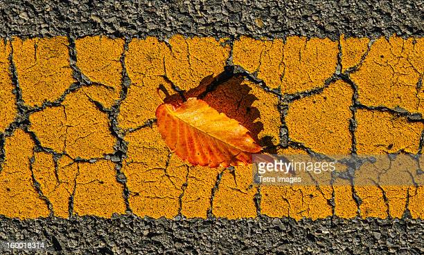 Fallen leaf on asphalt