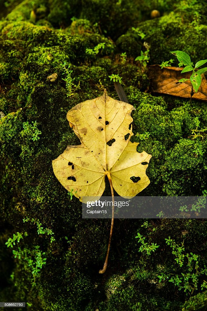 Fallen leaf : Stock Photo