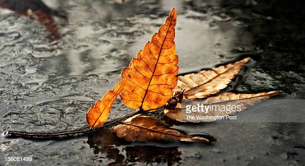 A fallen leaf sits in a shallow pool of water at the Franklin Delano Roosevelt National Memorial in Washington DC on Thursday December 22 2011 The...