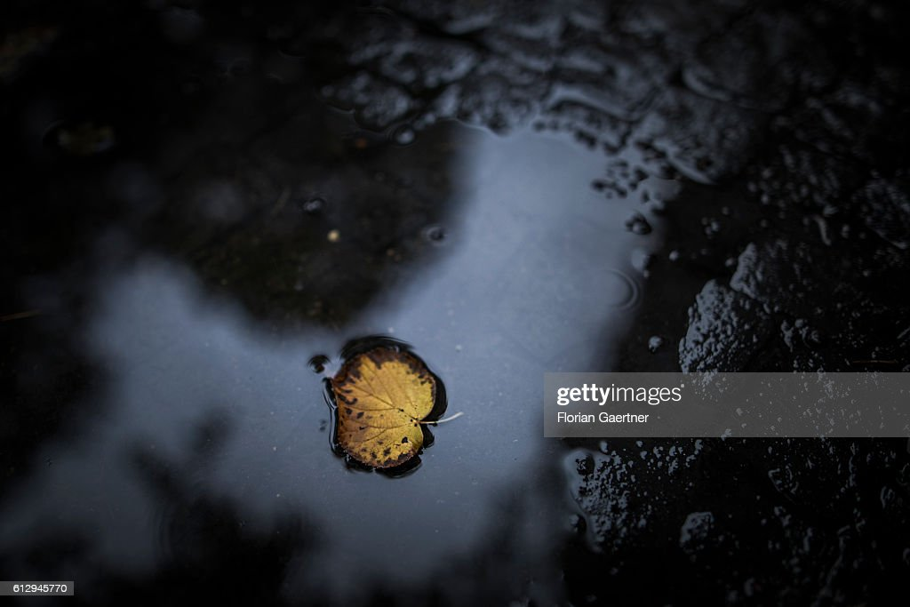 Autumn : News Photo