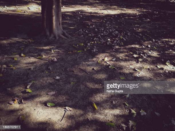 fallen leaves - autumn - neha gupta stock pictures, royalty-free photos & images
