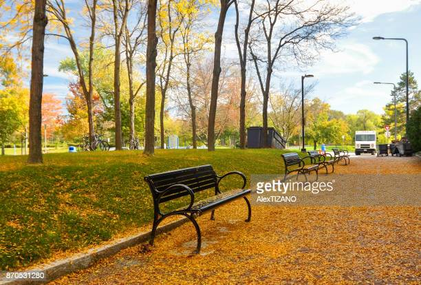 fallen leaves in university at buffalo - buffalo new york state stock pictures, royalty-free photos & images