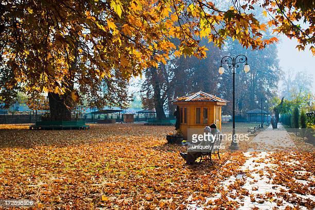 Fallen leaves on a garden path, Chinar Bagh, Srinagar, Jammu And Kashmir, India