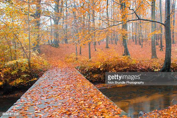 Fallen leaves on a path in the forest during an autumn day.